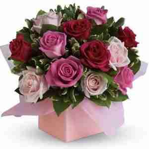 Blushing-Roses